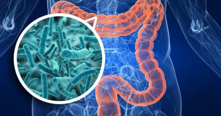 Estudio Funcional de Microbiótica intestinal